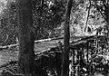 Ponte de Madeira sobre Igarapé - 1023, Acervo do Museu Paulista da USP (cropped).jpg