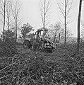 Populieren, bossen, Bestanddeelnr 167-0217.jpg