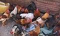 Poultry (2760536975).jpg