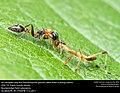 Predator vs Predator (33971673831).jpg