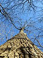 Prince William Forest Park - January Walk - Tree (12020899025).jpg