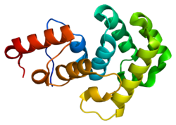 Protein MBD4 PDB 1ngn.png