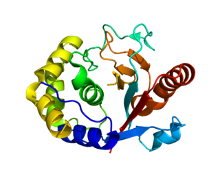Ubiquitin carboxyl-terminal hydrolase L5 protein-coding gene in the species Homo sapiens