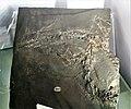 Protorosaurus speneri - 1.jpg
