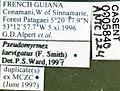 Pseudomyrmex laevigatus casent0005840 label 1.jpg