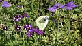 Purple-flower-butterfly.jpg