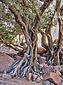 Qesm Sharm Ash Sheikh, South Sinai Governorate, Egypt - panoramio (17).jpg