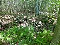 Quinebaug Trail - stone foundation ruins north of Hell Hollow Pond 2.jpg