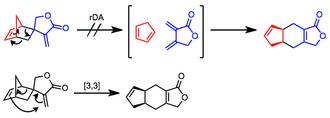 Retro-Diels–Alder reaction - Image: RDA Mech