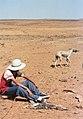 الصيد بكلب السلوقي شمال افريقيا