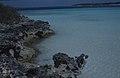 Rachicallis. Ironshore, east of West Bay (38154431784).jpg