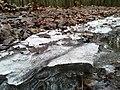 Red trail in Wielkopolski National Park (2).jpg