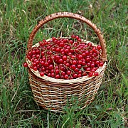 Redcurrant in basket 2018 G1.jpg