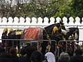 Rehearsal of the royal funeral procession for Rama IX - royal horse (03).jpg