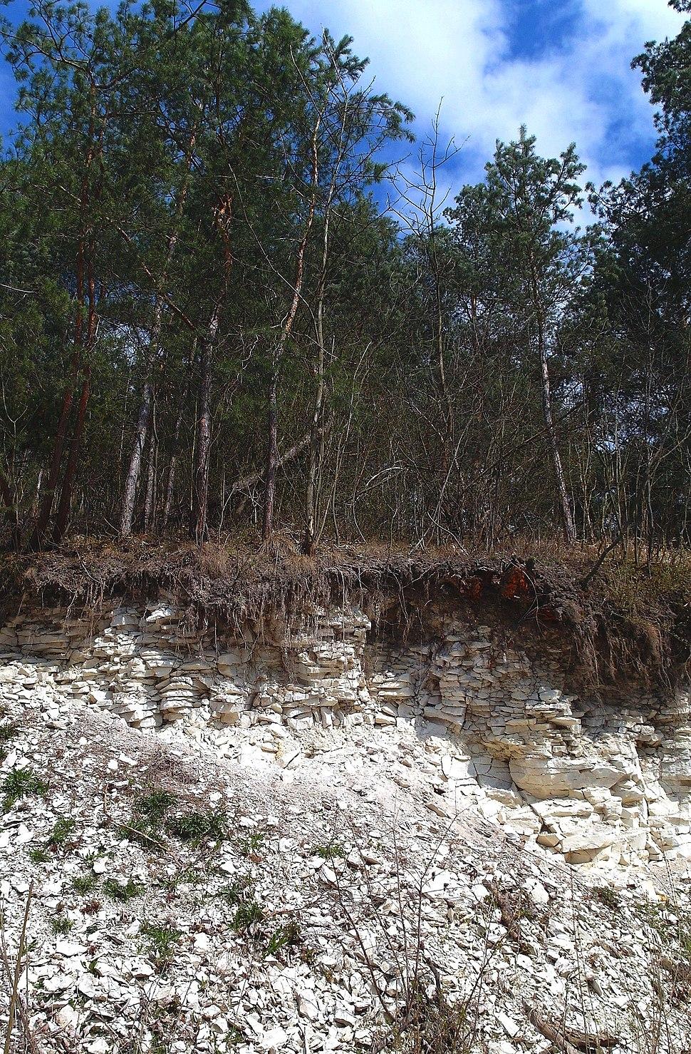 Rendzina soil on the Maastrichtian Chalk in Kozubów Landscape Park, Poland
