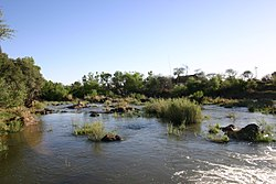 River, Madikwe Game Reserve.jpg
