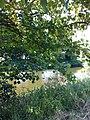 River - panoramio (63).jpg