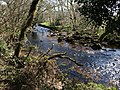 River Teign by Dogmarsh Wood - geograph.org.uk - 1242986.jpg
