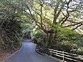 Roadway - Miyajima Natural Botanical Garden - DSC02307.JPG