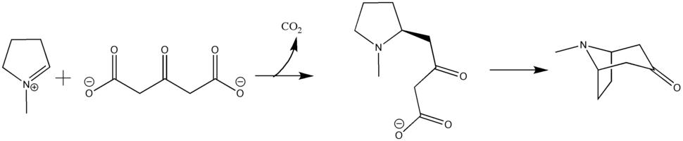 Robinson biosynthesis of tropane