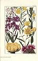 Rocky mountain flowers (Plate 32) (6279689597).jpg