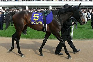 Rose Kingdom Japanese-bred Thoroughbred racehorse