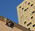 Rotterdam sculpture.jpg