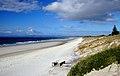 Ruakaka Beach (13) (8691950366).jpg
