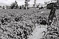 SAB Projet agricole 2005.jpg