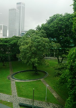 Singapore Management University - SMU's campus green with a Ficus religiosa (pippal) tree in the middle