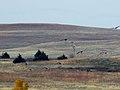 Sandhill Cranes (10823675153).jpg