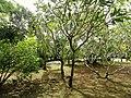 Sankyo Garden - DSC01171.JPG