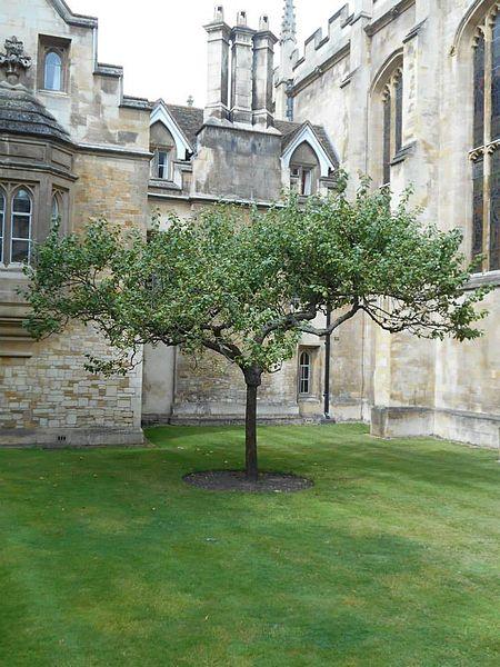 아이작 뉴튼의 만유인력의 법칙을 떠올리게 했던 사과 나무