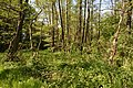 Schleswig-Holstein, Nordhastedt, Landschaftsschutzgebiet Mühlenteich NIK 2481.jpg