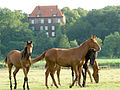 SchlossAgathenburg Rückansicht aus der Marsch.jpg