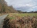 Schools' playing fields, Greycoat Lane - geograph.org.uk - 1730203.jpg