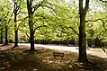 Scoutcentrum Buitenzorg Baarn - panoramio (5).jpg