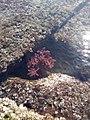 Sea plants.jpg