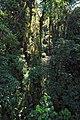 Selvatura Adventure Park 02.jpg