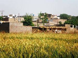 Seri-Bahlol Showing village view and agriculture land.JPG