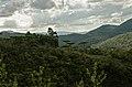 Sertão - Araucárias no Alto da Serra.JPG