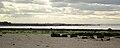 Seton sands west.jpg