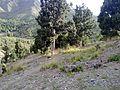 Shawal Valley , North Waziristan , Pakistan - panoramio (12).jpg