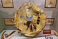 Shield, Lakota - Native American collection - Peabody Museum, Harvard University - DSC05780.jpg