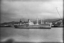 Ship Groote Beer, ca 1950s.jpg