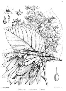 Image Result For Seed Coloring Page