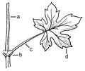 Simple leaf diagram (PSF).png