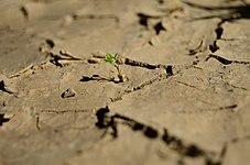 Single plant in a desert.jpg