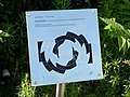 Singularitaet Rolf Nolden 01.jpg