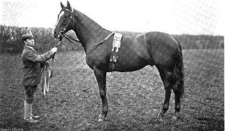 Sir Hugo British-bred Thoroughbred racehorse